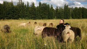 Saara ja lampaat laitumella